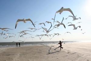 volo uccelli mare