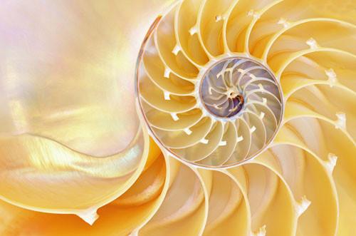 spirale gialla