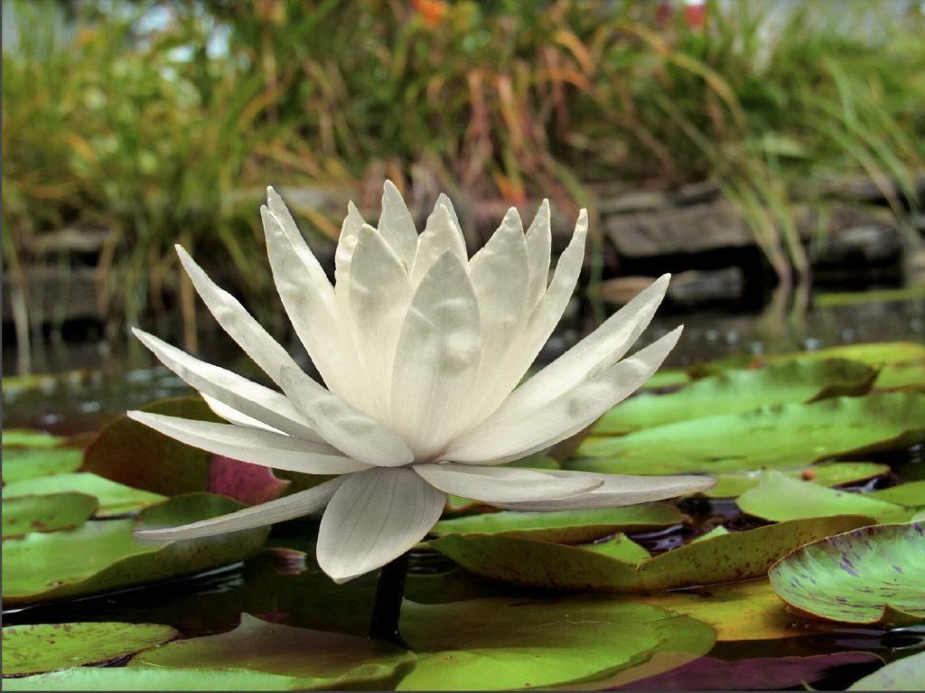 Incontro gratuito di Meditazione Creativa